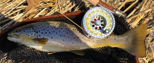 3 Tand Fly Reel Grand River Brown Trout A
