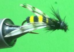 Joshua's Bumble Bee Fly