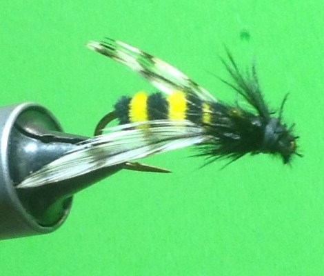 Joshua's Bumble Bee Fly