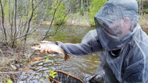 Northern Ontario Brook Trout Bug Jacket.