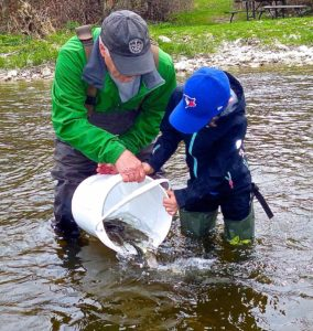 Grand River Brown Trout Stocking May 2016 A