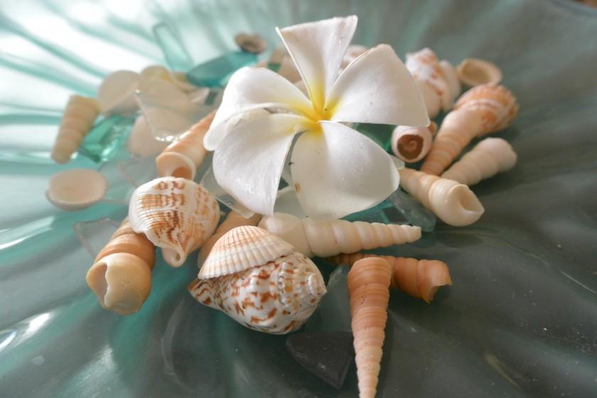 plumeria and sea shells   https://juliesaffrin.com