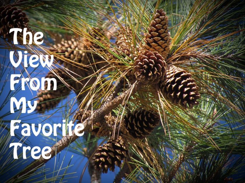 The View From My Favorite Tree | https://juliesaffrin.com