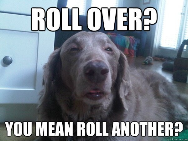 stoner dog rolls another blunt