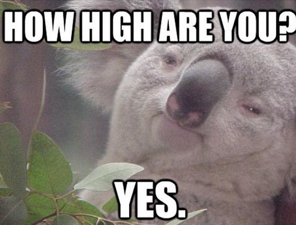 Koala-high-dank-memes