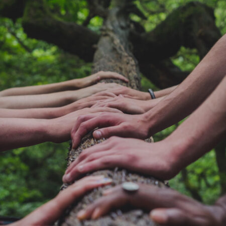 a tree trunk with many people's hands touching it
