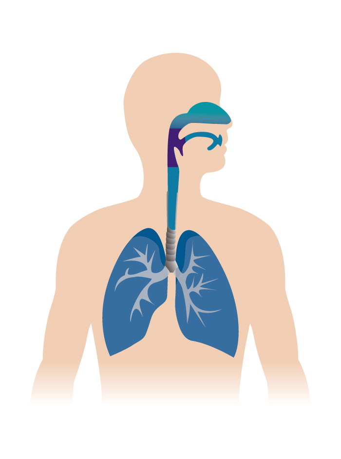 Respiratory Diagram