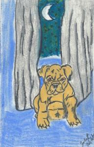 Chupacabra puppy