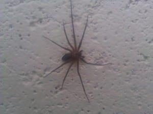 Commercial Pest Control Kansas City 29