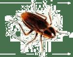 cockroach control in kansas city