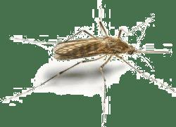Zika in Kansas City