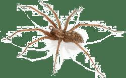 Spider Companies in Kansas City