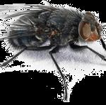 fly-150x148
