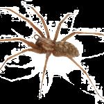 spider-150x150