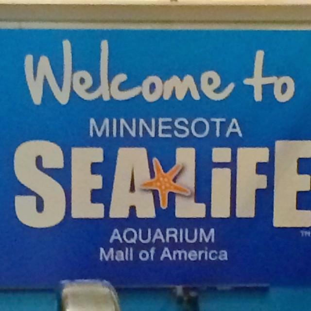 #mallofamerica #minneapolis they have a Barbie Art exhibit and an aquarium.