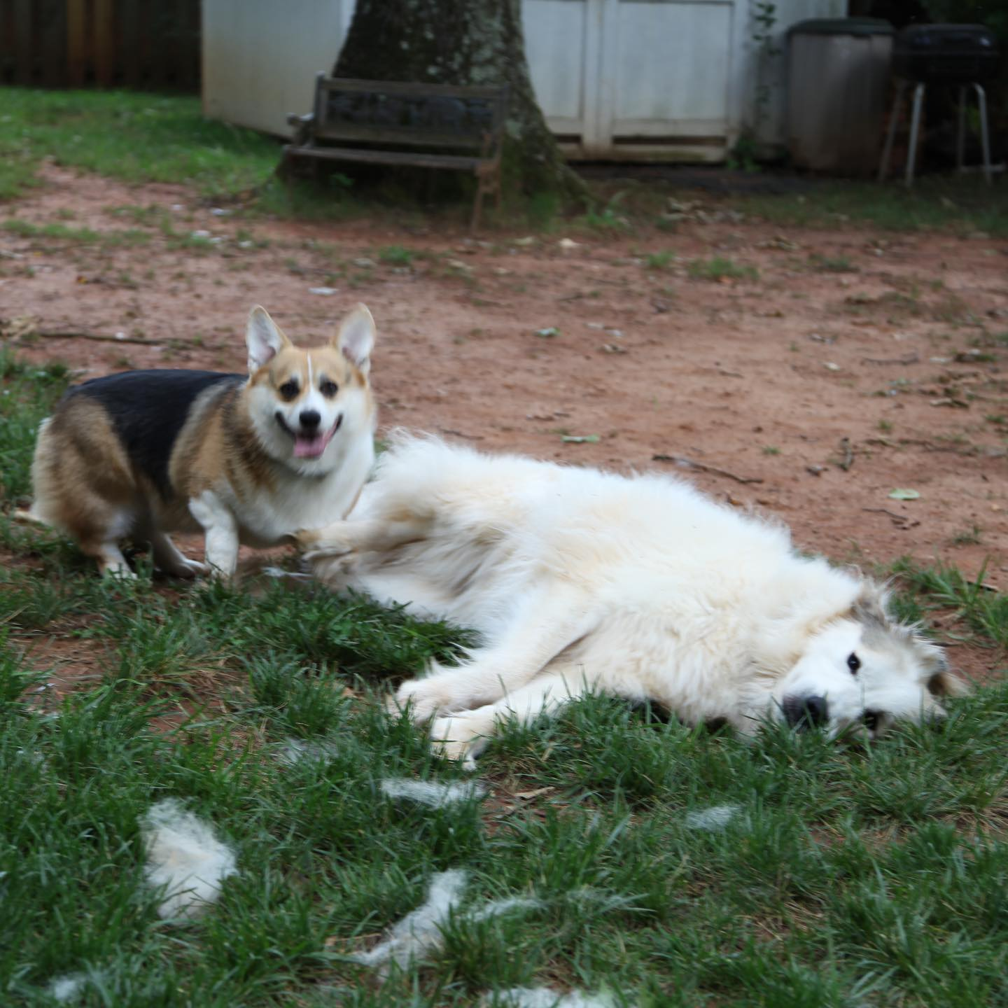 Buddy had one love whom he always tried to be a gentleman with, but Delilah was too tempting.