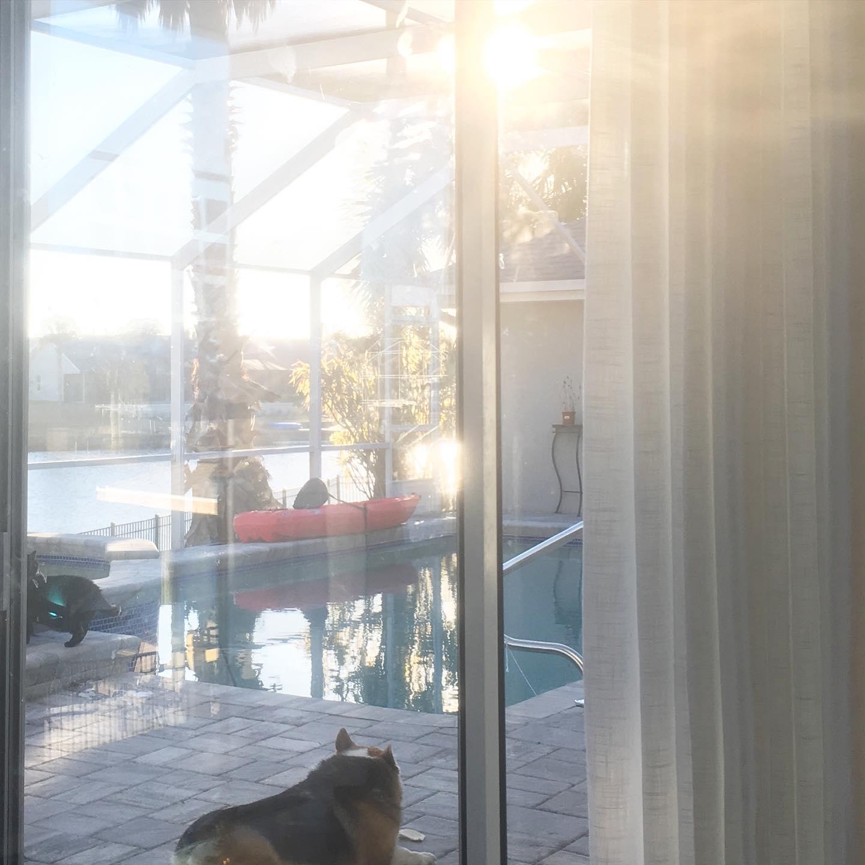 "Sunset by the pool. Goodbye my friend.  Buddy ""The Dog"" Daniels - 04/01/2010 - 03/12/2021"