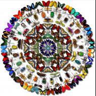 Jennifer Ivory: Kaleidoscope
