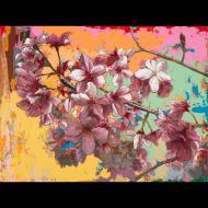 David Palmer: Cherry Blossoms #5