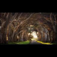 Fred Mertz: Tree Tunnel