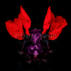 Bat-Creature-of-the-Night-062118-9700