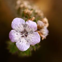 Cactus-Flower-5645-053109