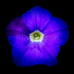 Blue-Evening-053118-5369