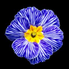 Blue-Jean-Girl-032718-9967