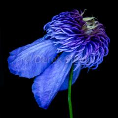 Blue-Valentine-042918-2173