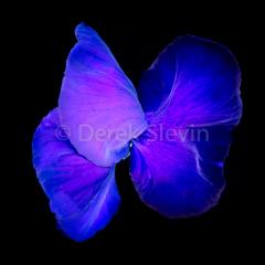 Butterfly-Glitter-021618-8133