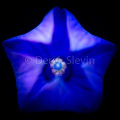Deep-Blue-080717-5454
