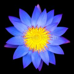Fire-Star-062118-0126-3