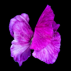 Butterfly-Firefly-020218-6279