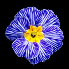 M1-Blue-Jean-Girl-032718-9967