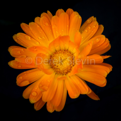 Orange-Crush-110214-6435