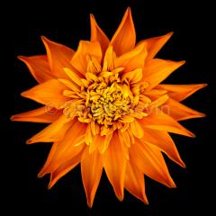 Orange-Marmalade-043016-3628