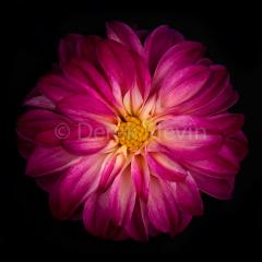 Bloom-062517-8729