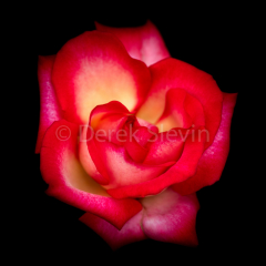La-La-Love-You-020918-7613