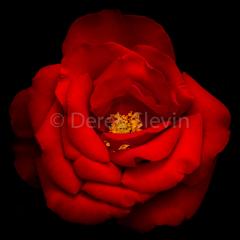 Secrets-of-Desire-040718-1848