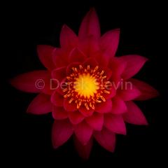 Star-Goddess-070217-1803