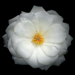 Flower-of-Life-032318-0062