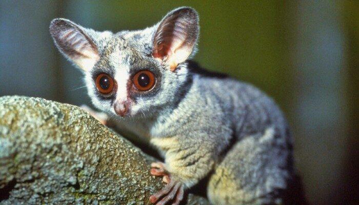 CARACAL Wildlife Rehabilitation Centre