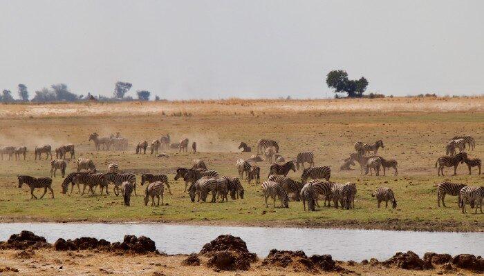 Wildlife in Chobe National Park