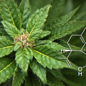 CANNABICYCLOL: AN ARGUMENT FOR MORE RESEARCH