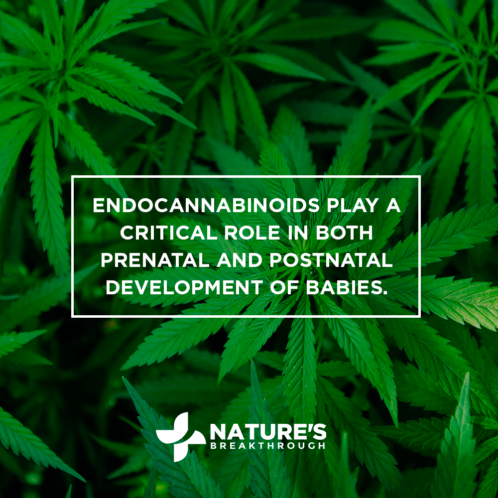Does CBD Help or Hinder in the Development of Children?