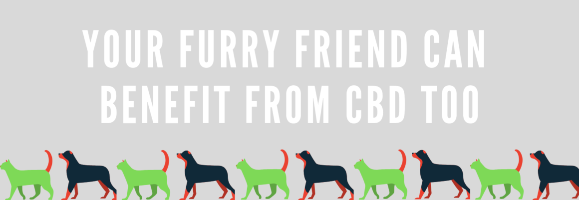 Ananda Pets: The Best CBD Oil for Dogs and Cats