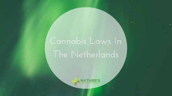 Pot is Still Illegal in Europe's Cannabis Capitol | The Netherlands