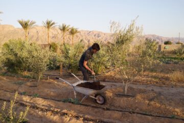 WWOOFING IN EGYPT