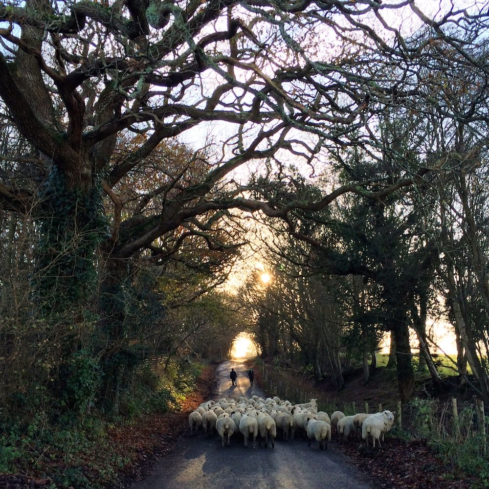 sheepuphill