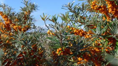 hedgerow food